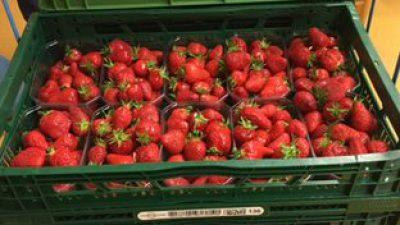 Erdbeeren… überall nur Erdbeeren